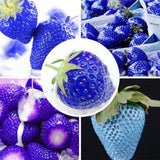 Rare Blue Strawberry Seeds (200 pcs)