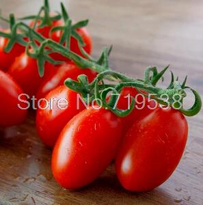 Potted Tomato Seeds (200 pcs)