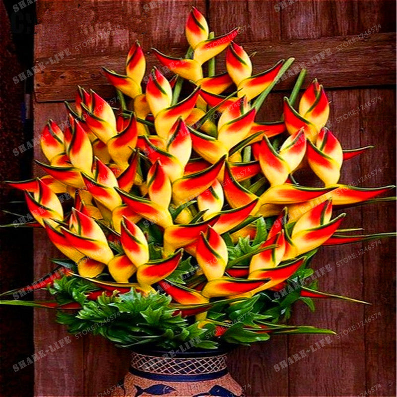 Bird Of Paradise Seeds (100 pcs)