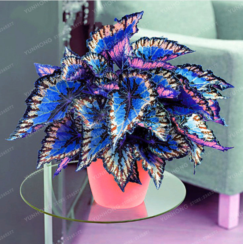Japanese Rainbow Dragon Seeds (100 pcs)