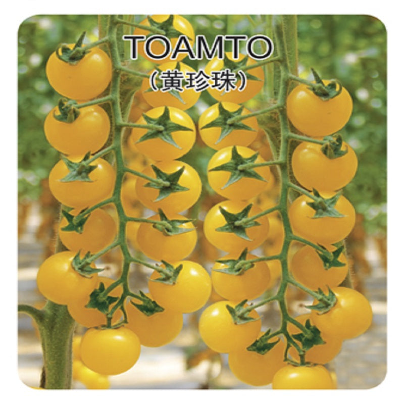 Pearl Tomato Seeds (200 pcs)