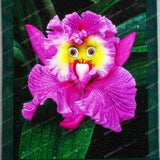 Monkey Face Orchid Seeds (100 pcs)