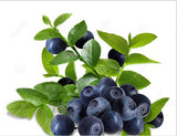 Potted Blueberry Seeds (40 pcs)