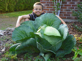 Rare Giant Cabbage Seeds (200 pcs)