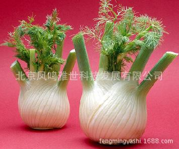 Fragrant Bulb Fennel Seeds (100 pcs)