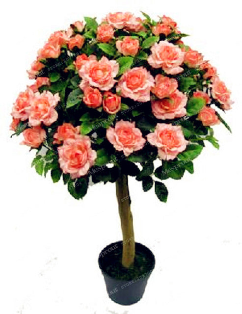 Aromatic Rose Tree Seeds (100 pcs)