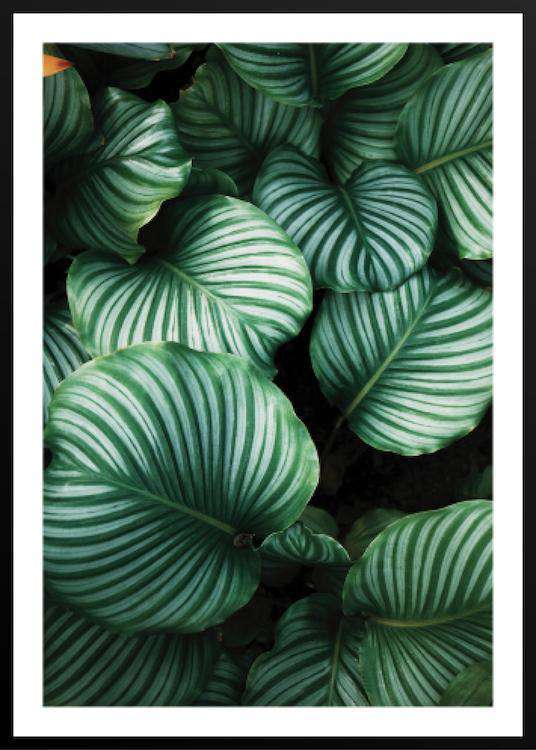 GREEN AND WHITE LEAFED PLANTS | Photographs | Funqle.com