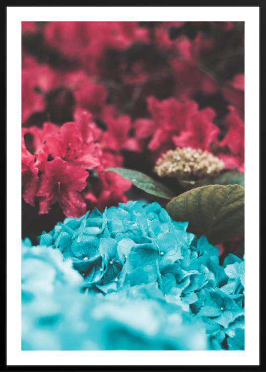 BLUE AND RED LEAVES | Photographs | Funqle.com