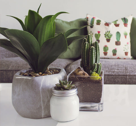 Cactus as a part of boho decor
