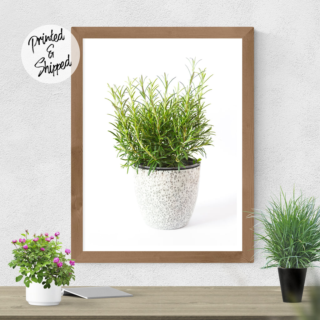 Kitchen Decor - Rosemary Art Print | Brandless Artist