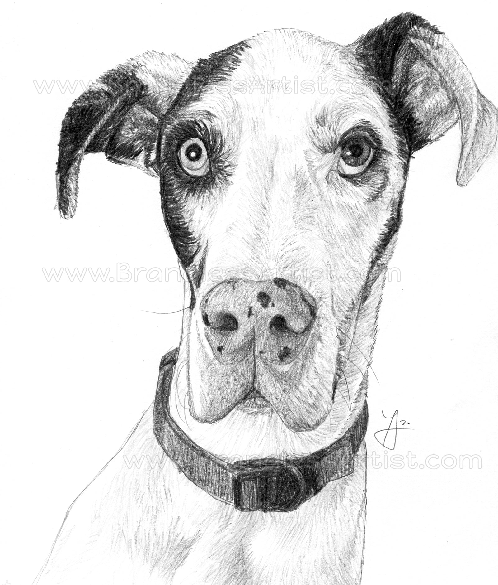 Dog Sketch from Photo - Pet Portrait Custom Pencil Drawing | Brandless Artist