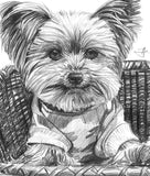 Custom Dog Portrait from Photo - Pet Pencil Drawing | Brandless Artist