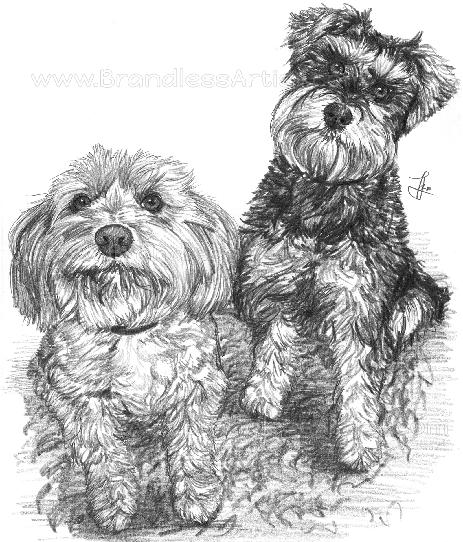Custom Dog Drawing from Photo Black and White | Brandless Artist