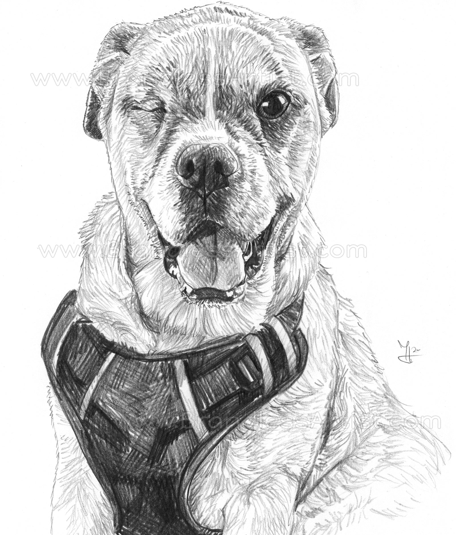 Cute Dog Sketch from Photo - Pencil Drawing Portrait | Brandless Artist