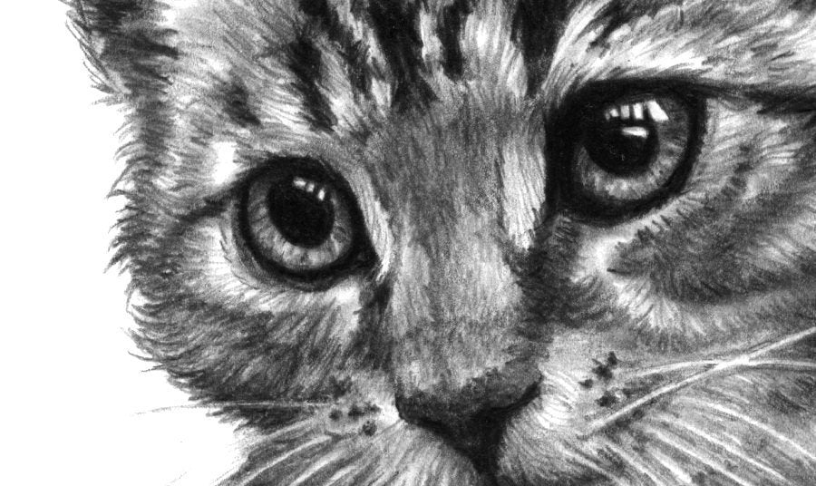Cat Print | Cat Pencil Drawing Poster | Black and White Drawn Cat Wall Decor | Pencil Drawing Kitten Printed on Paper Gift for Cat Owners - Brandless Artist
