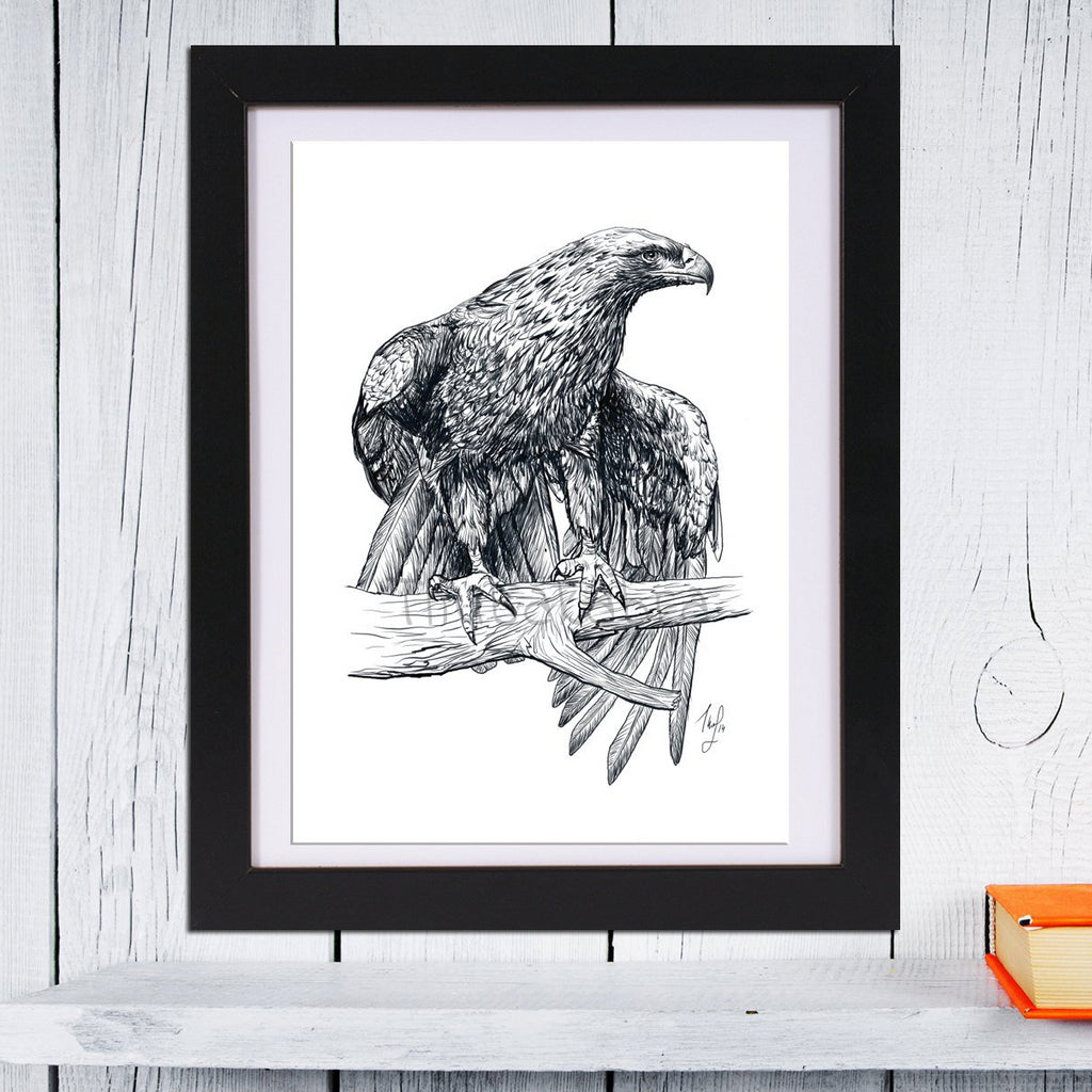 Falcon Art Print or Poster | Falcon Illustration GICLEE PRINT | Wildlife Wall Art | Wild Animal Print - Brandless Artist