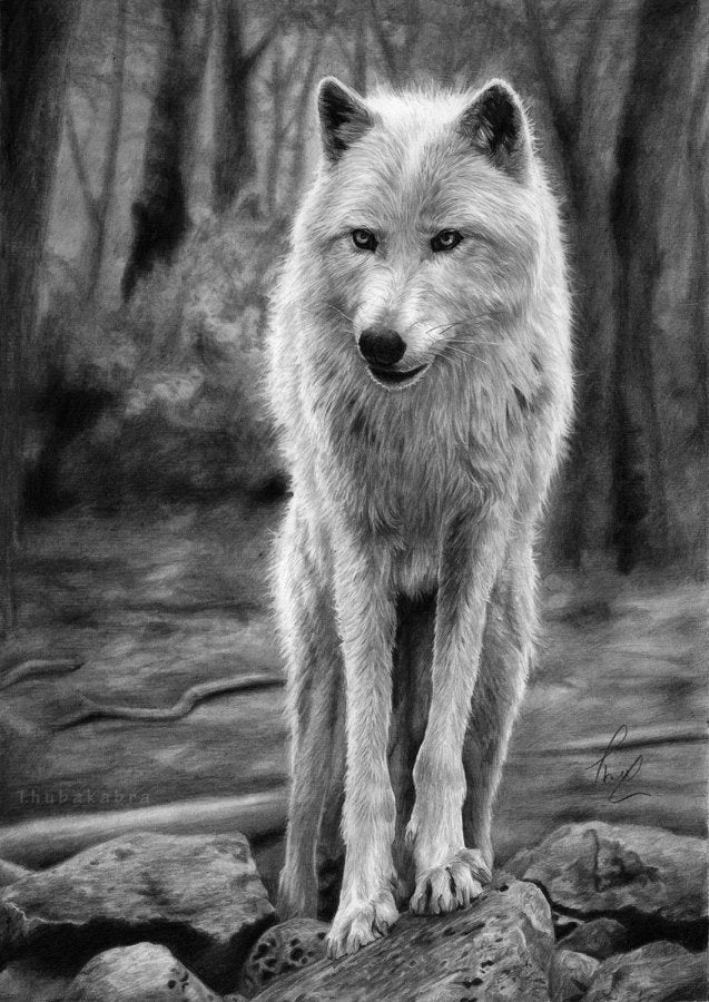 Wolf Print | Wolf Wilderness Poster | Black and White Drawing of a Wolf Art Print | White Wolf in Forest Print - Brandless Artist