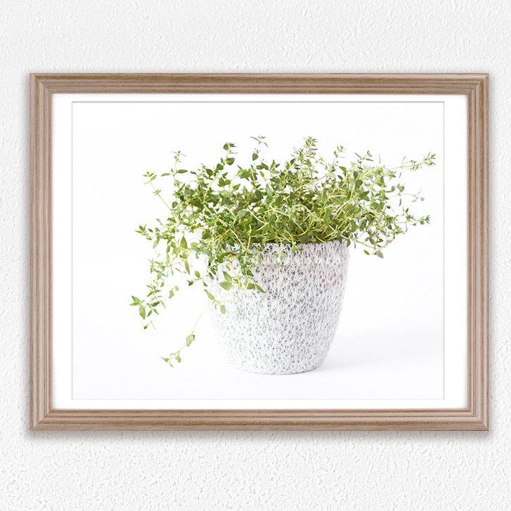 Spice Thymes Photography Art Print for Kitchen Walls - Brandless Artist
