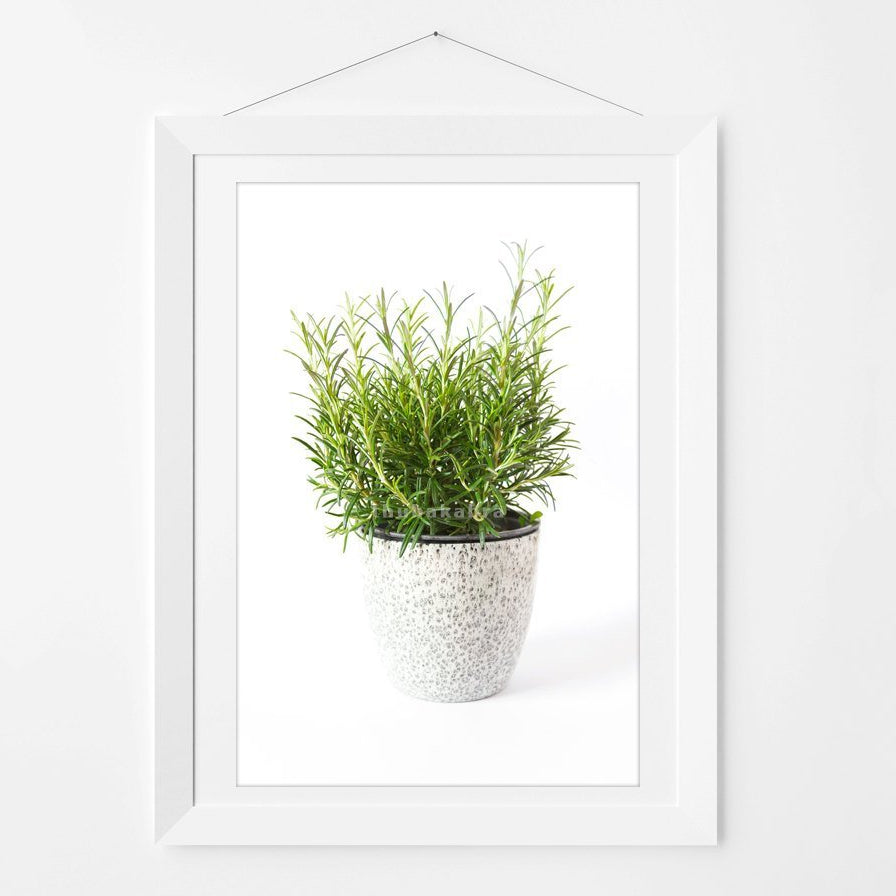 Bright Rosemary Photography Art Print for Kitchen Walls - Brandless Artist