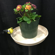 Plant Stand: Single