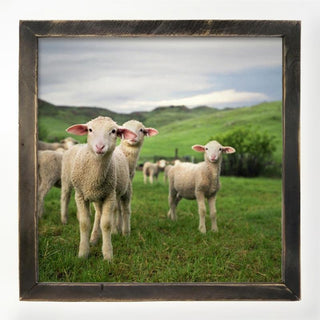 Sheep in the pasture XL / Natural