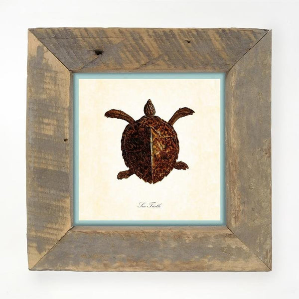 Turtle Small / Natural