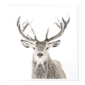Snag deer head antlers glass framed wall art