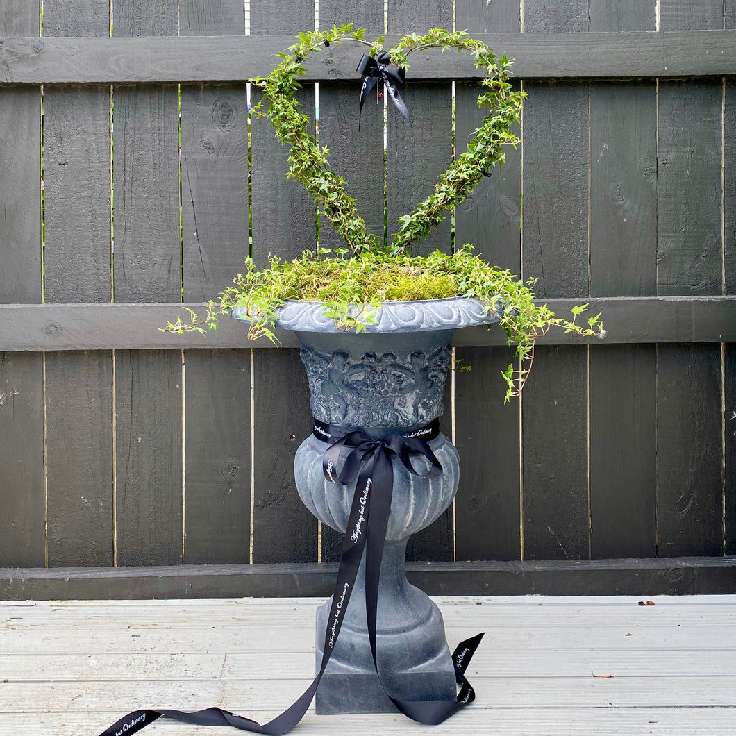 Large Grey French Cherub Urn planted with heart topiary (Available soon)