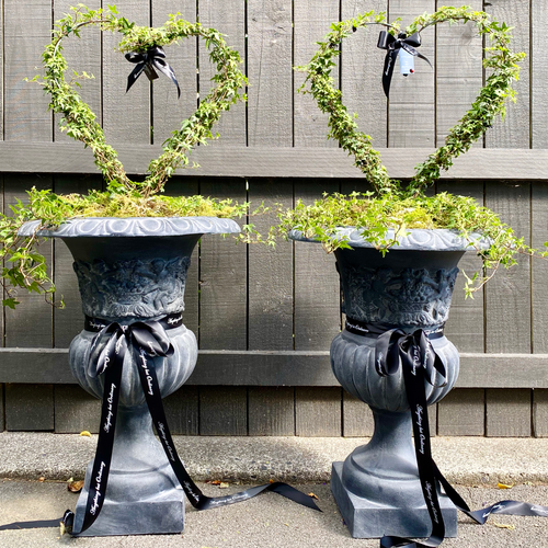 Pair of Large Grey French Cherub Urns planted with heart topiary (Available soon)