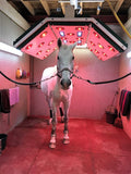 Paardensolarium model PS840 Met paard in stal
