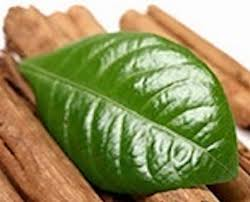 Pure Cinnamon Leaf Essential Oils