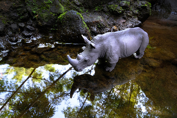 Rhino and His Reflection
