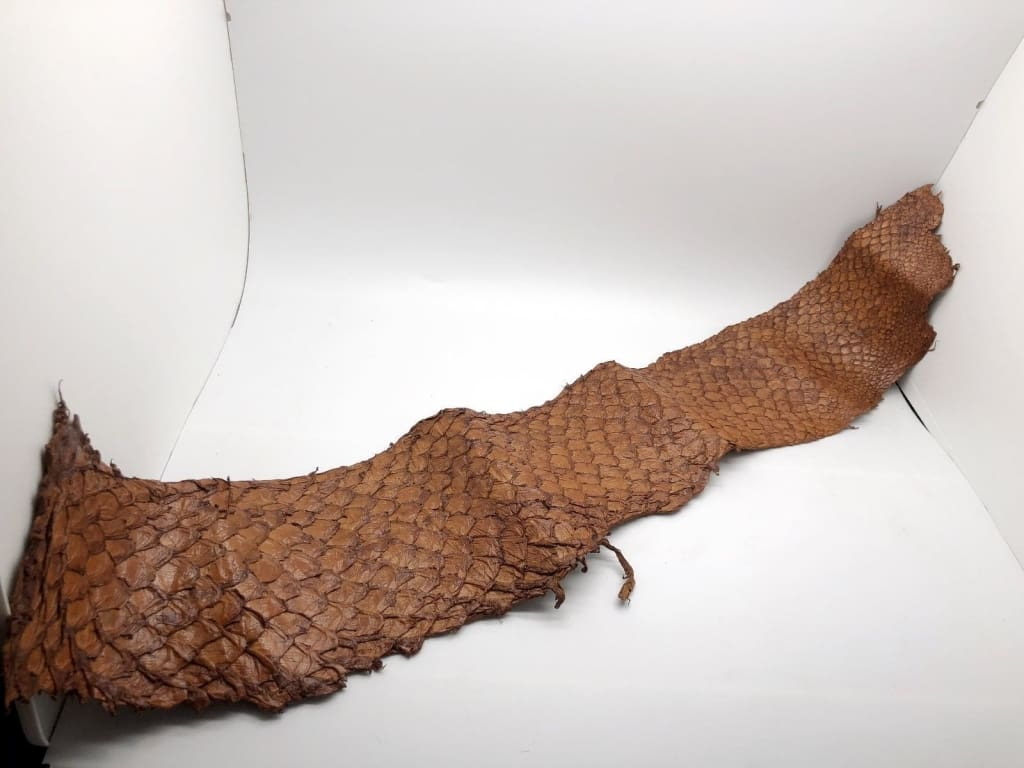 Handmade Brown Dyed Pirarucu Arapaima Amazon Peruvian Leather - Collectables:animal Collectables:fish & Marine Life:fish