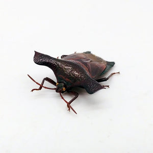 Pygoplatys Validus Shield Bug - Collectables:animal Collectables:insects & Butterflies