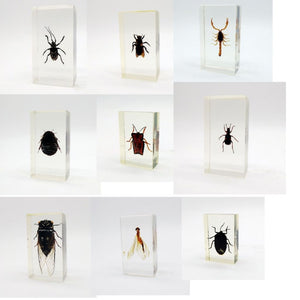 Real Insects Taxidermy Bugs Paperweight In Acrylic Block - Collectables:animal Collectables:insects & Butterflies