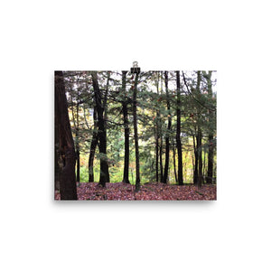 Berkshire shadow trees poster