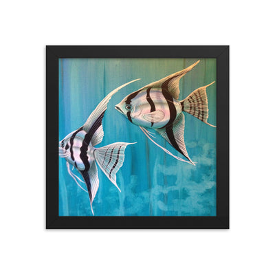 Freshwater Fish Tropical Fish Angelfish with blue background poster