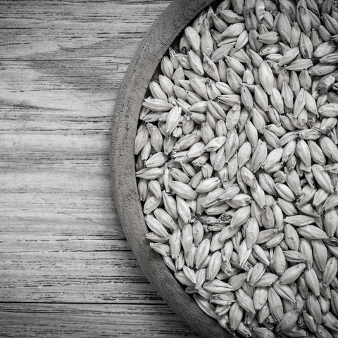 What happens to barley during malting?