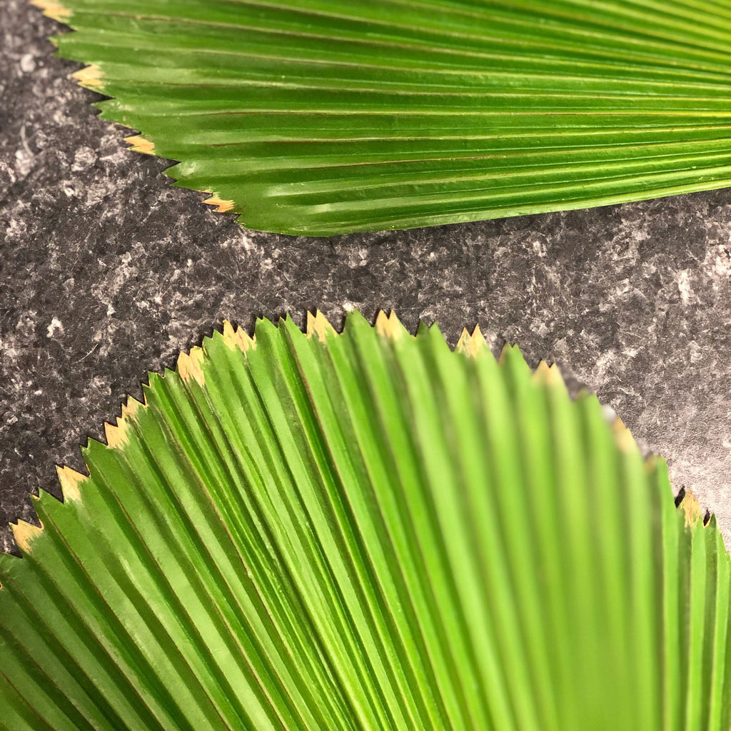 Fan Palm Leaf (Pack of 6)