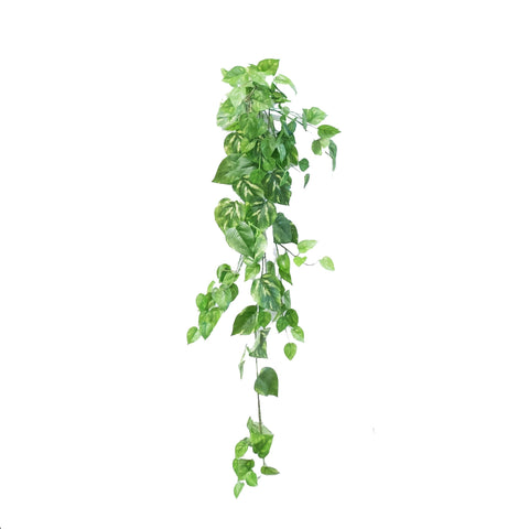 Single Stem Hanging Pothos (Set of 2)