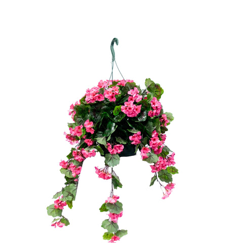 Geranium Flowering Basket