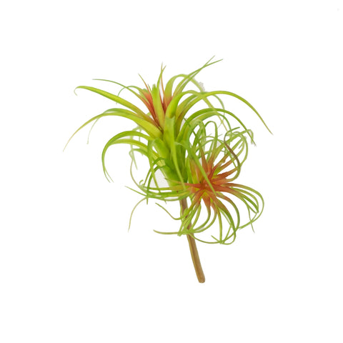 "AIR PLANT 7.75"" (PACK OF 3)"