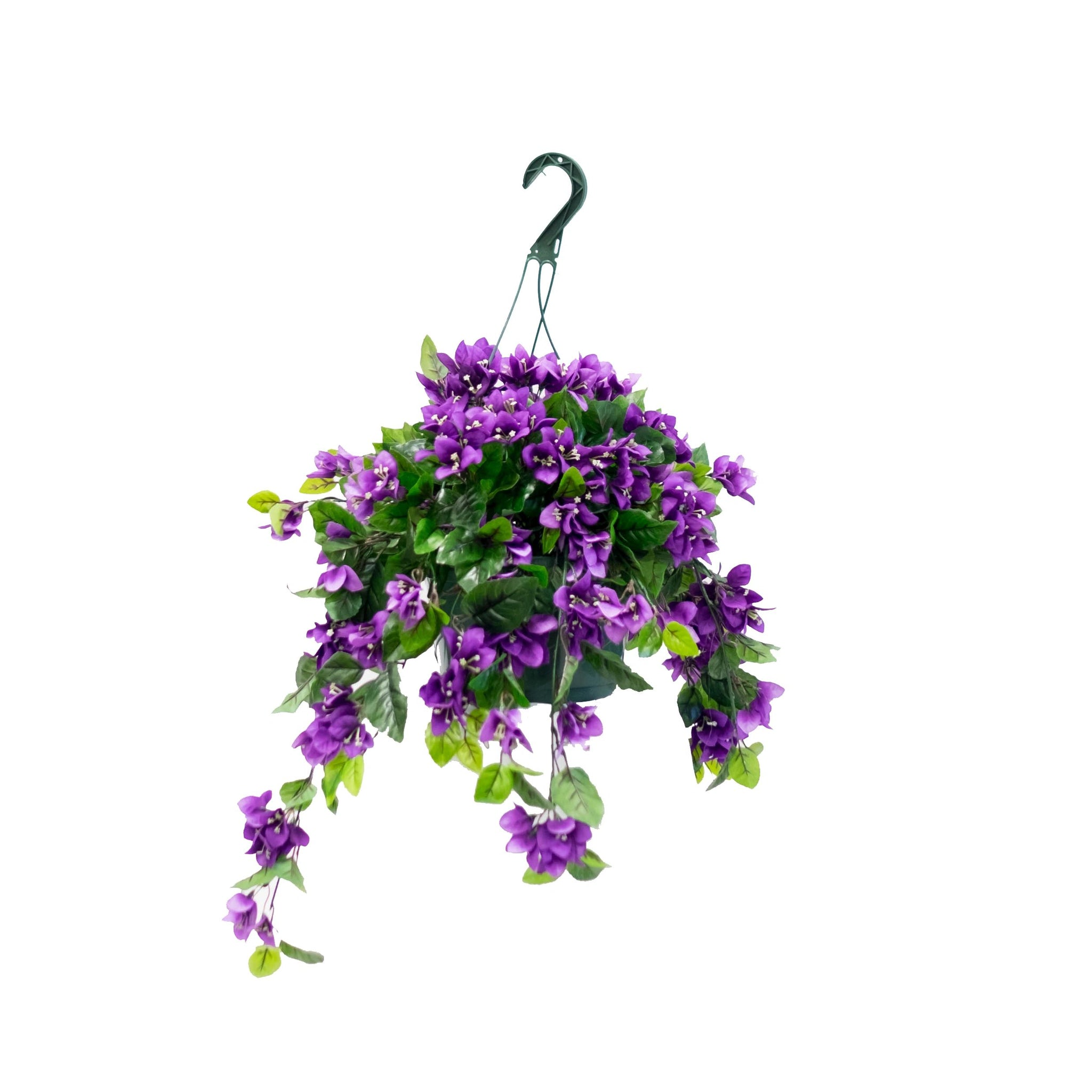 BOUGAINVILLEA Flowering Basket