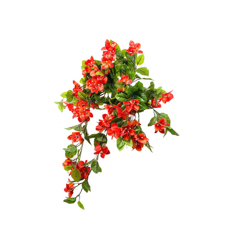 SINGLE STEM FLOWERING BUSH (HANGING) - BOUGINVIELLIA (ORANGE,PURPLE)