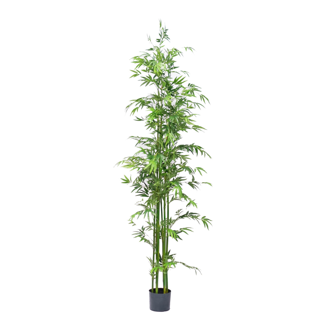 Bamboo Tree 7ft (Pick up)