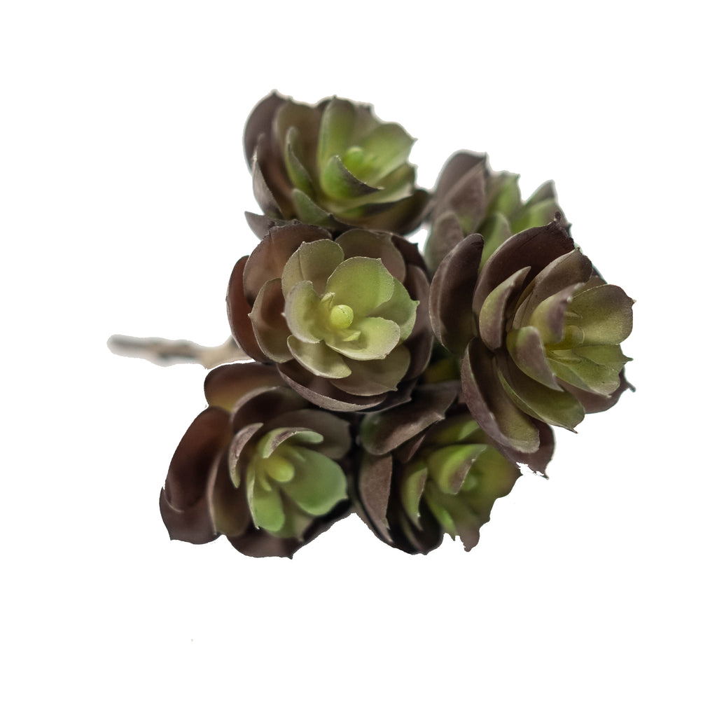 "Sedum 7.5"" (Pack of 3)"