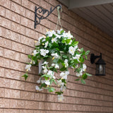 Hibiscus Flowering Basket