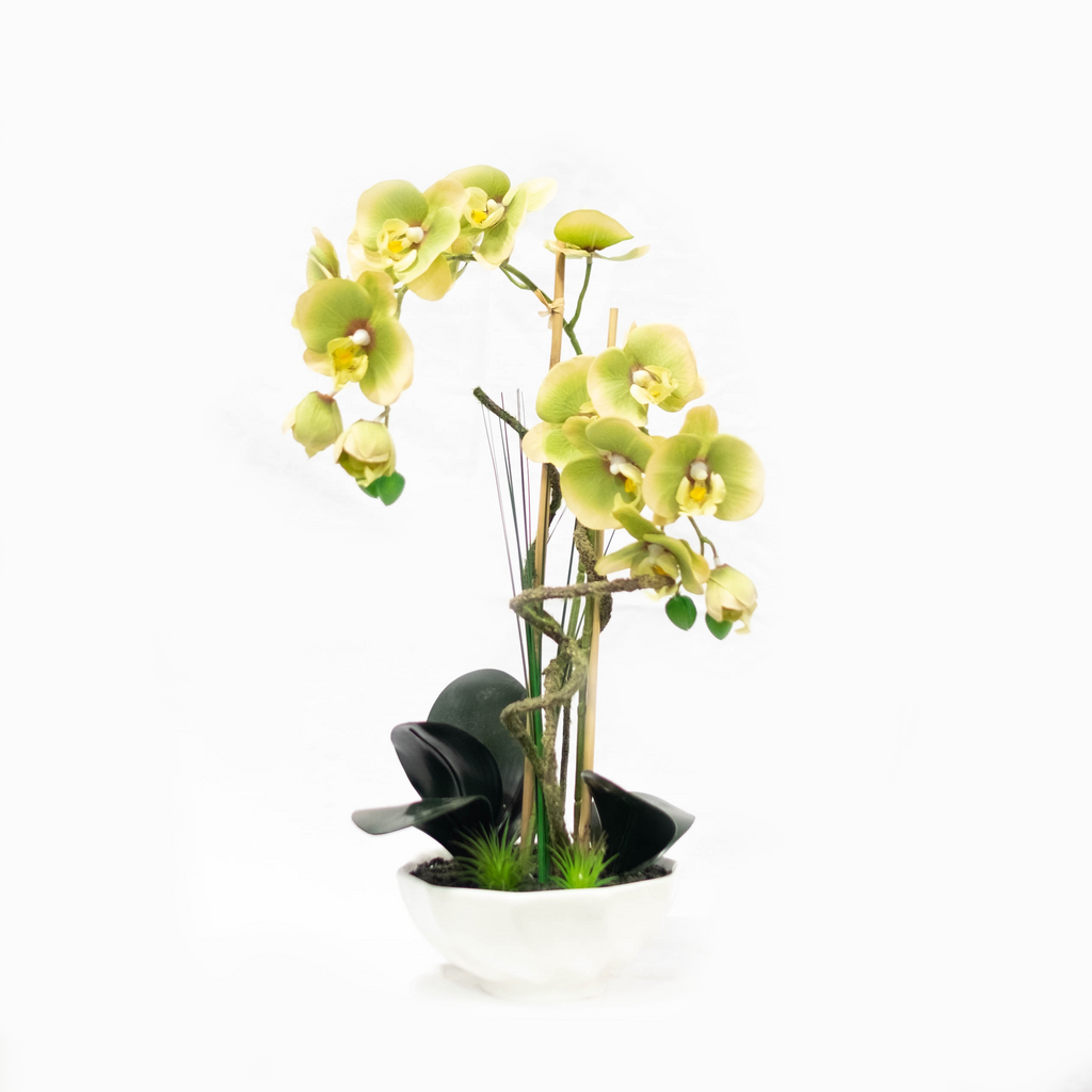 Phalaenopsis Orchid in Wavy Dish 20.5""