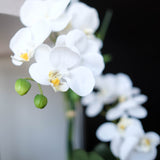 Phalaenopsis Orchids 18.5""