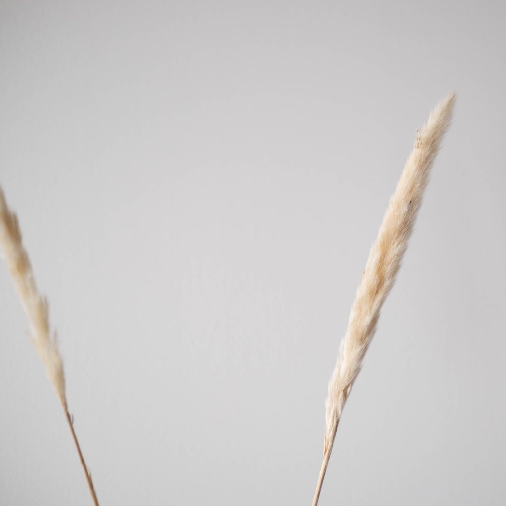 """Natural"" Pampas 25.5""-28"" (Pack of 6)"